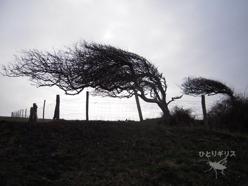 セブン・シスターズ・カントリー・パークの木